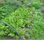 Kako da pripremite i održavate baštu bez kopanja