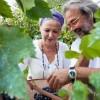 Priča o Vuku i Marini Krstić