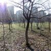 Beogradska priča o čoveku koji sadi drveće