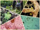 Predavanje: Tečni mikrobiološki dodaci zemljištu
