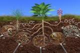 Predavanje o kompostu 4.3.2021.