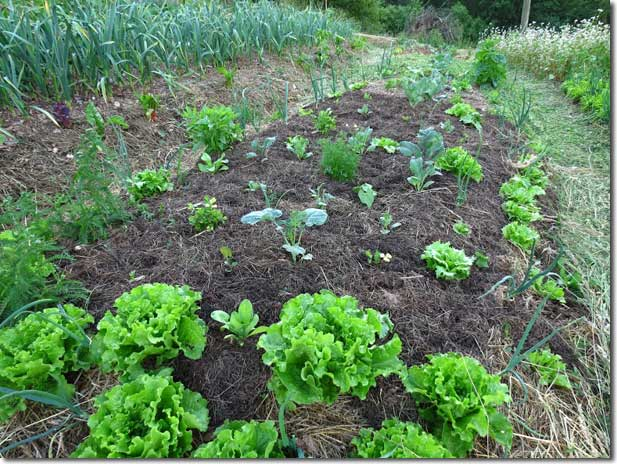 No_Dig_Vegetable_Garden_04