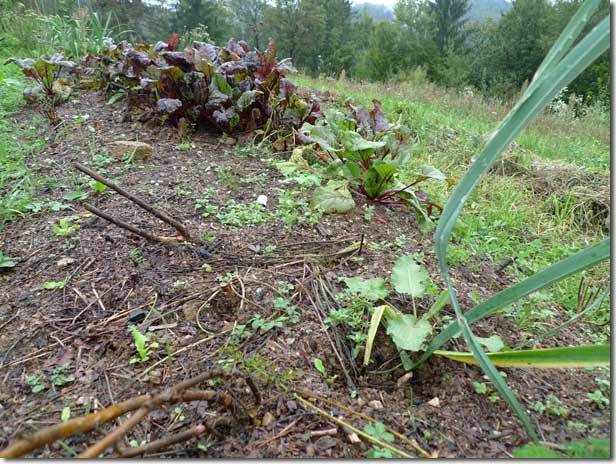 No_Dig_Vegetable_Garden_08