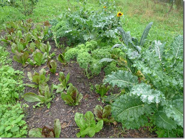 No_Dig_Vegetable_Garden_11