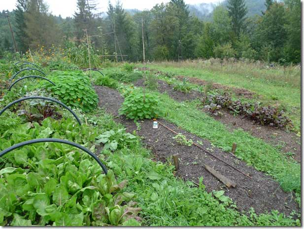No_Dig_Vegetable_Garden_13