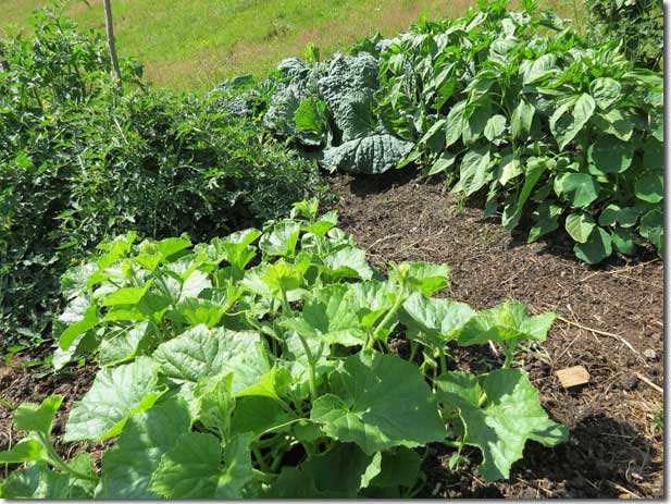 No_Dig_Vegetable_Garden_15
