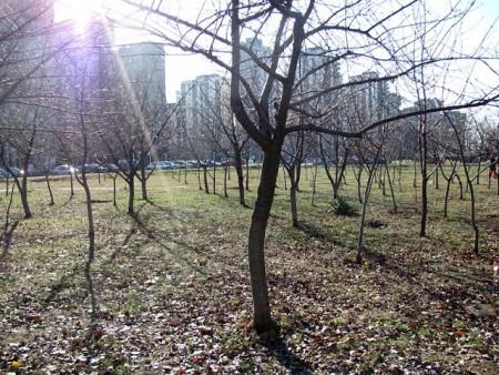 2011-decembar-03-Blok62