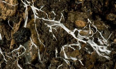 Micelijum kao internet