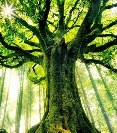 Mitologija drveća