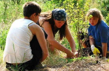 mulching-and-planting-at-kostilkovo