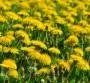 Najbolje lekovite biljke za kompostiranje