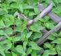 Deset najboljih udruživanja biljaka