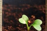 Tajni život tla